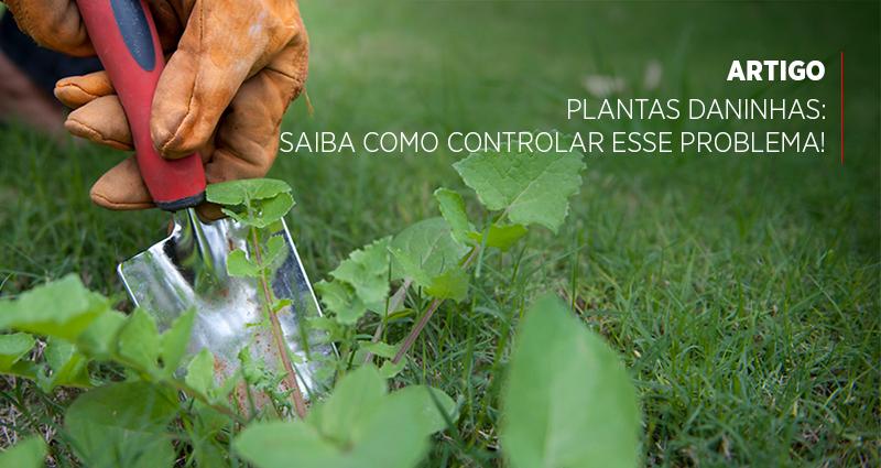 Plantas daninhas: saiba como controlar esse problema!