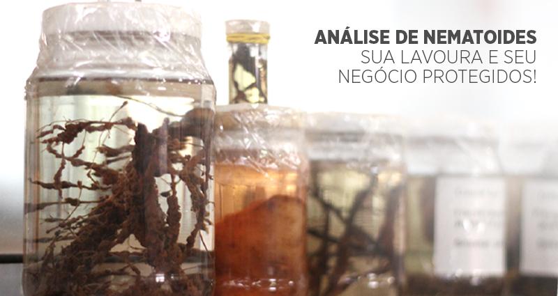 Quais as principais espécies de nematoides que ameaçam as plantações de cana-de-açúcar?