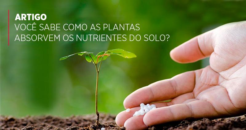 Você sabe como as plantas absorvem os nutrientes do solo?
